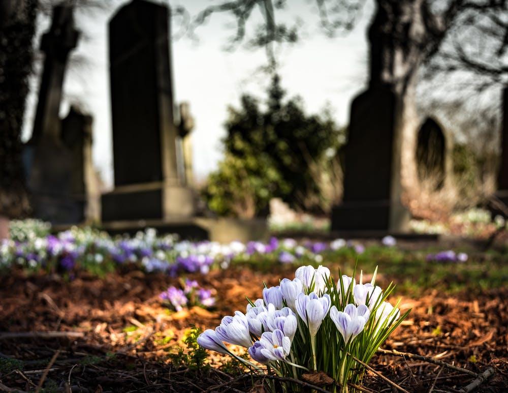 Plantjes op begraafplaats